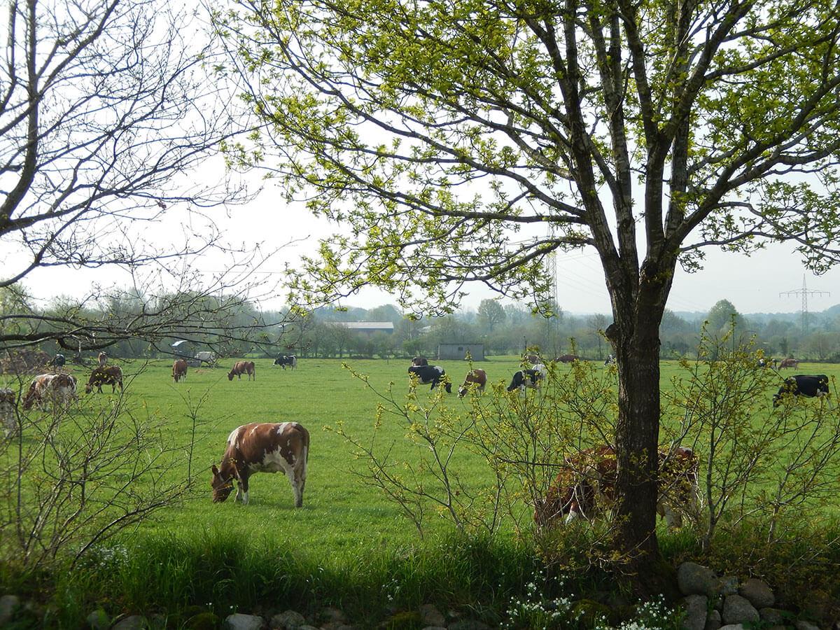 Frühjahr - das erste Gras auf der Weide