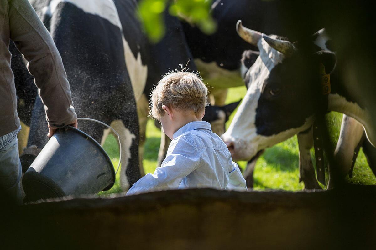 Fütterung der Kühe