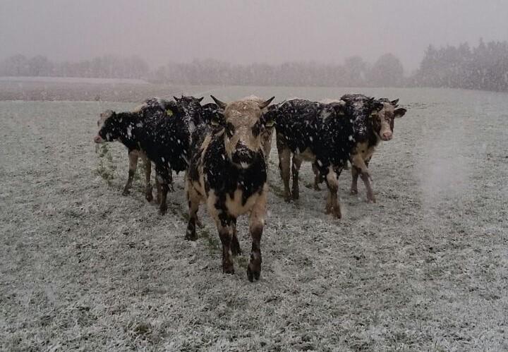 Jungtiere im Schneegestöber